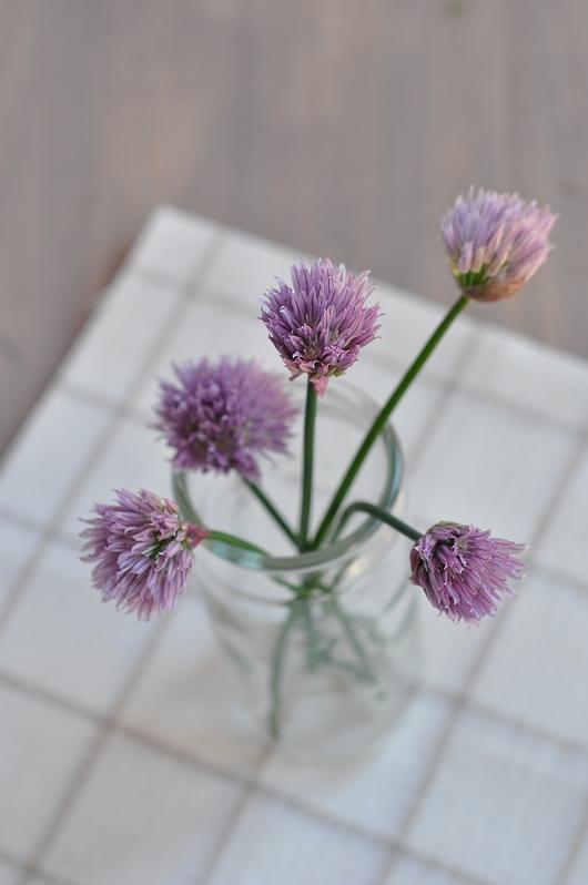 fleurs de ciboule
