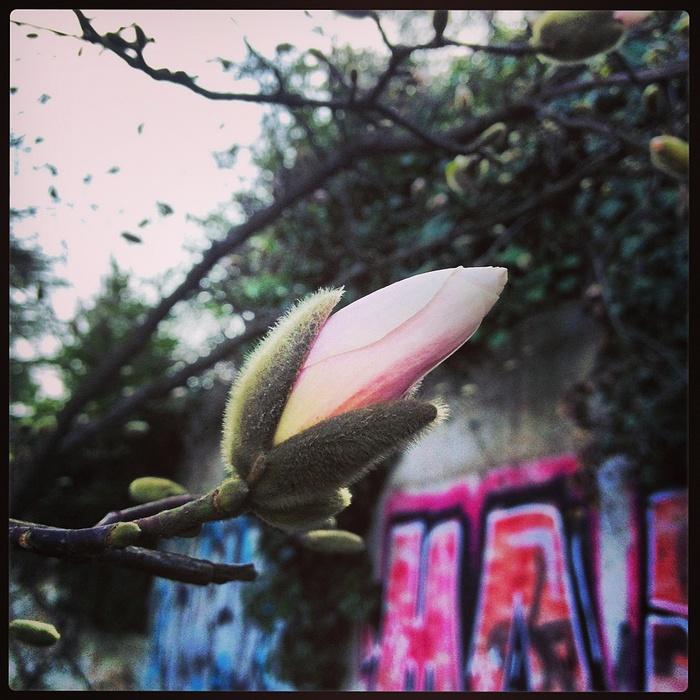 iphone_mars13_08