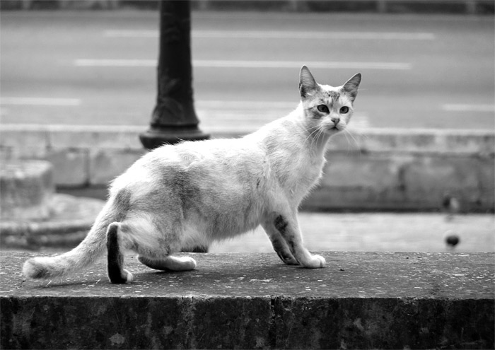 chats à Malte