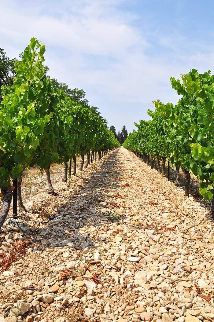 vigneronscaractere_03