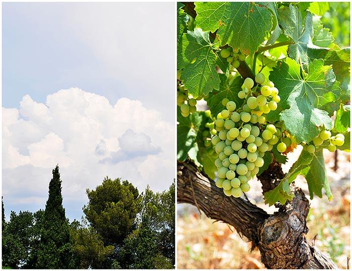 vigneronscaractere_06