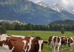 suisse_gourmandegruyere_00