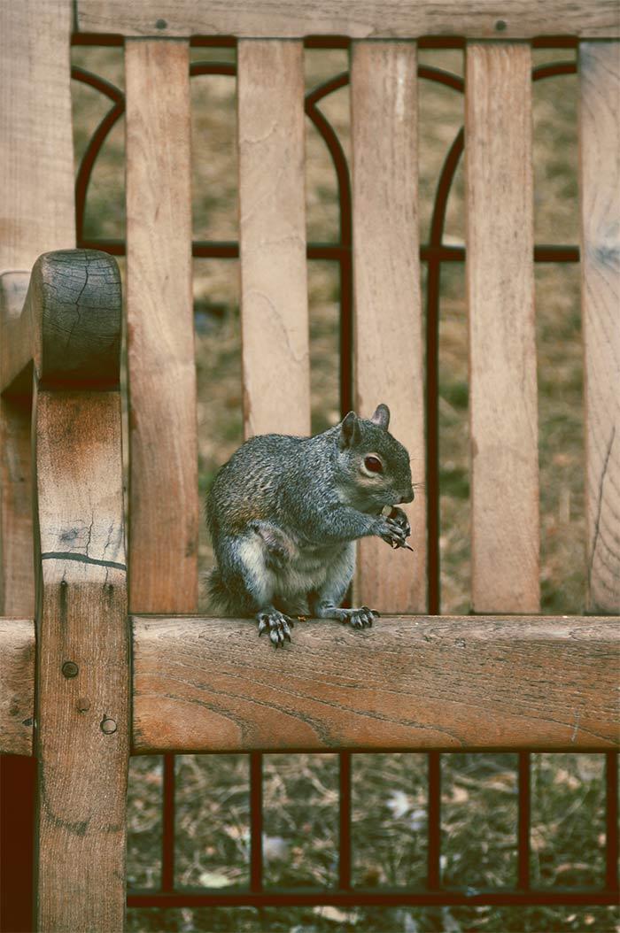 ecureuil parc Londres