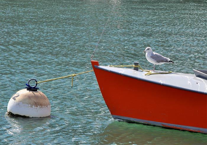 bateau mouette