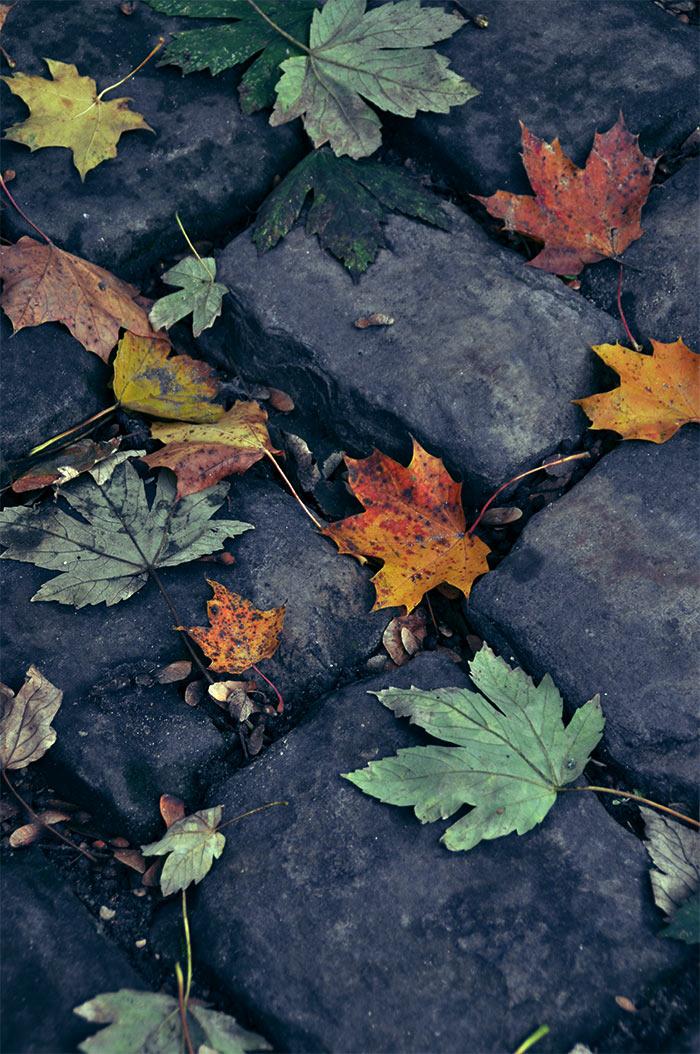 feuilles sur pavés