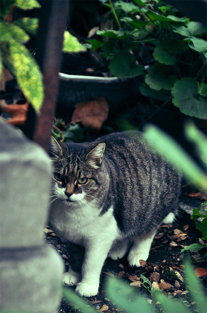 chat dans cimetiere