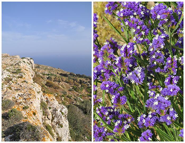 garrigue de Malte