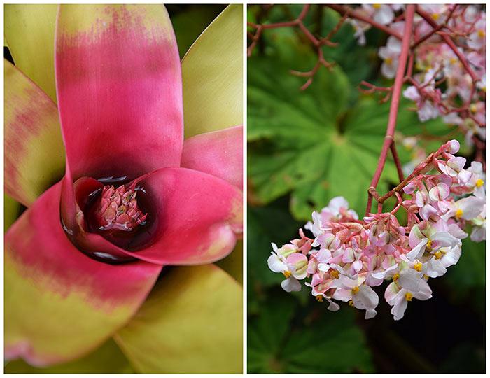 dominique papillote gardens