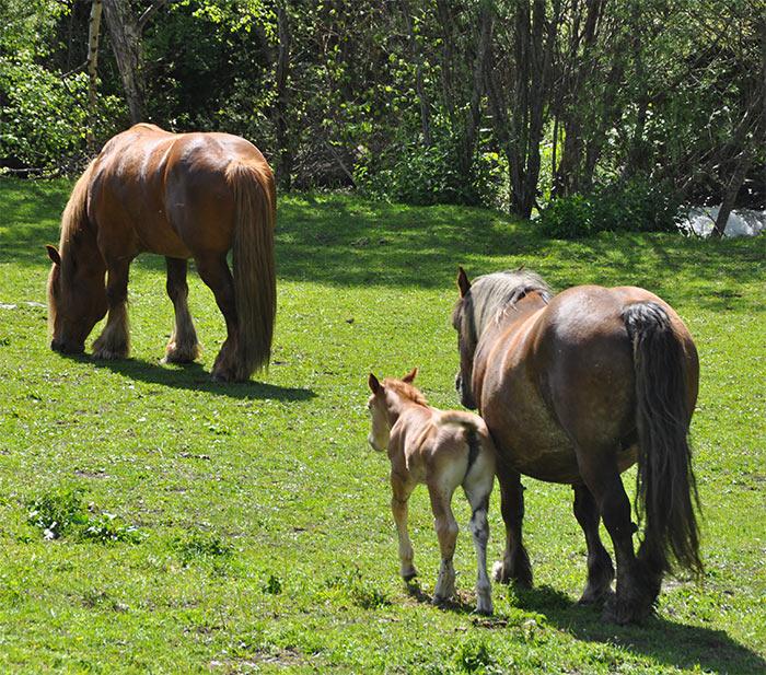 chevaux Andorre