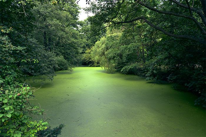 berlin Tiergarten river