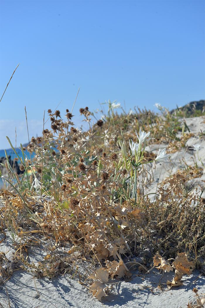 fleur blanche plage