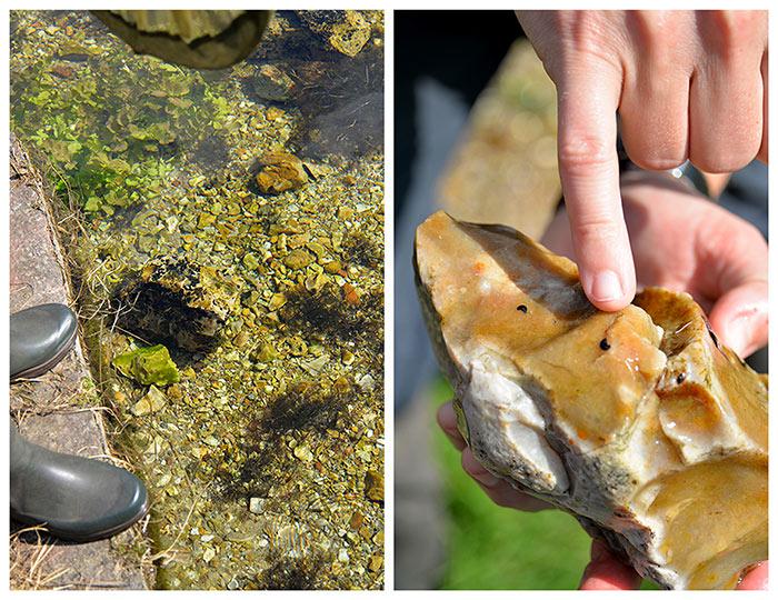 sentier anguille roche eure