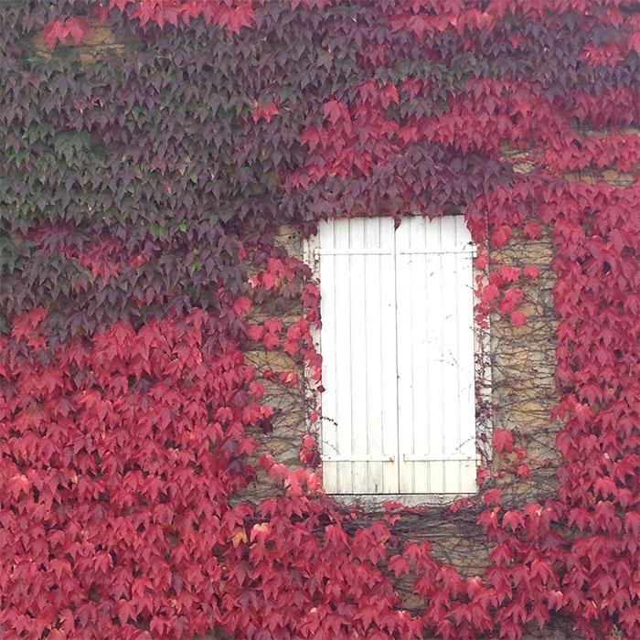 maison feuilles rouges