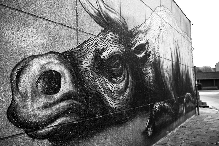street art Roa Gent