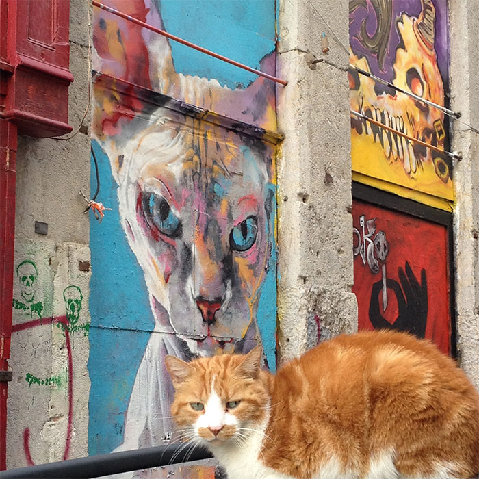 street art lyon chat