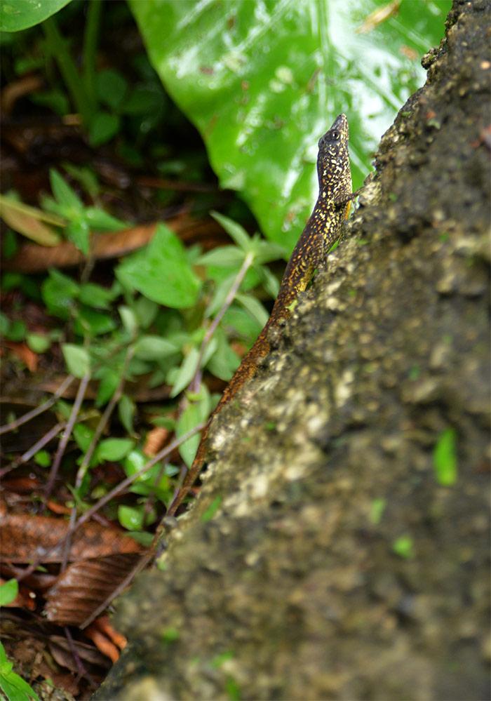 lezard tronc arbre