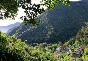madère nature