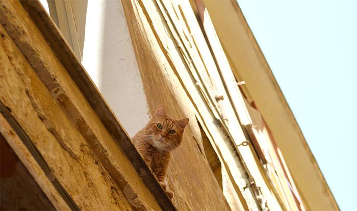 chat par fenetre