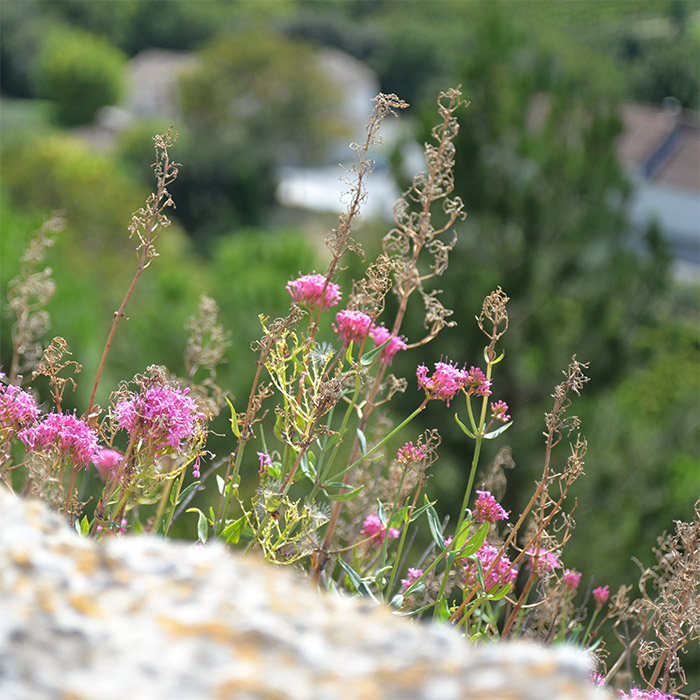 village menerbes provence