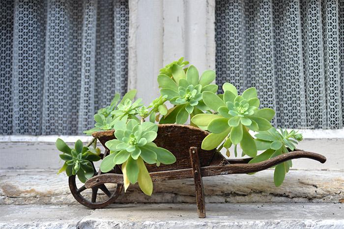 brouette plantes