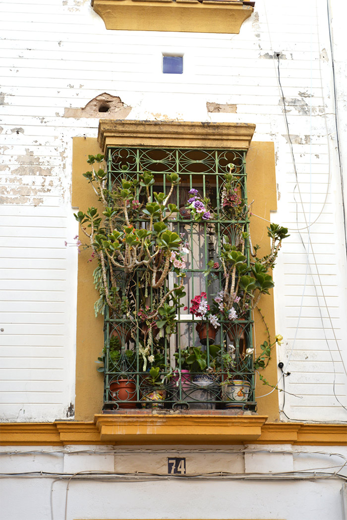 plantes grasses fenetre