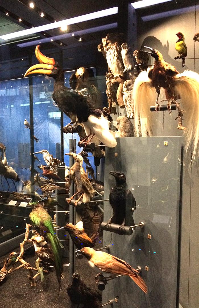 museum toulouse oiseaux