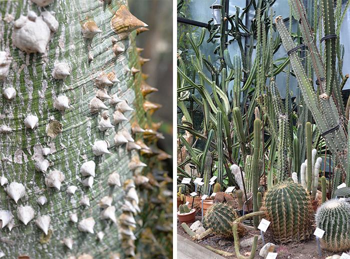 cactus jardin botanique toulouse
