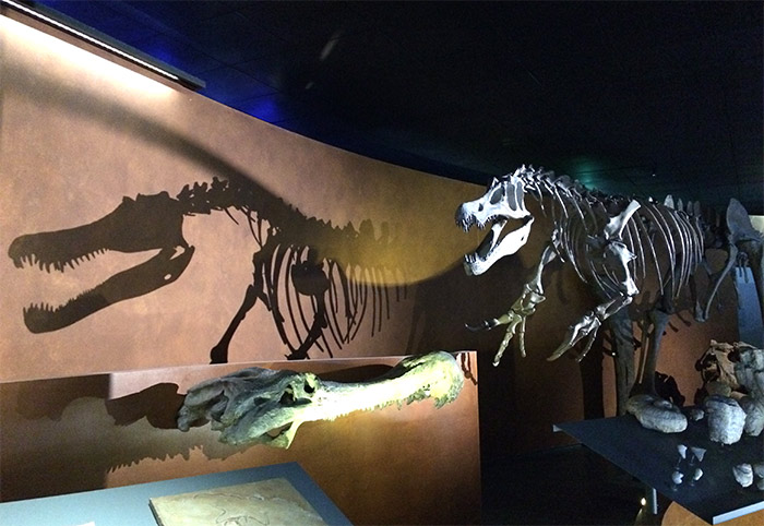 dinosaure museum toulouse