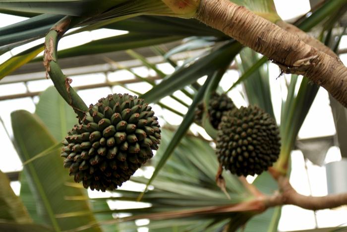 montreal serres jardin botanique