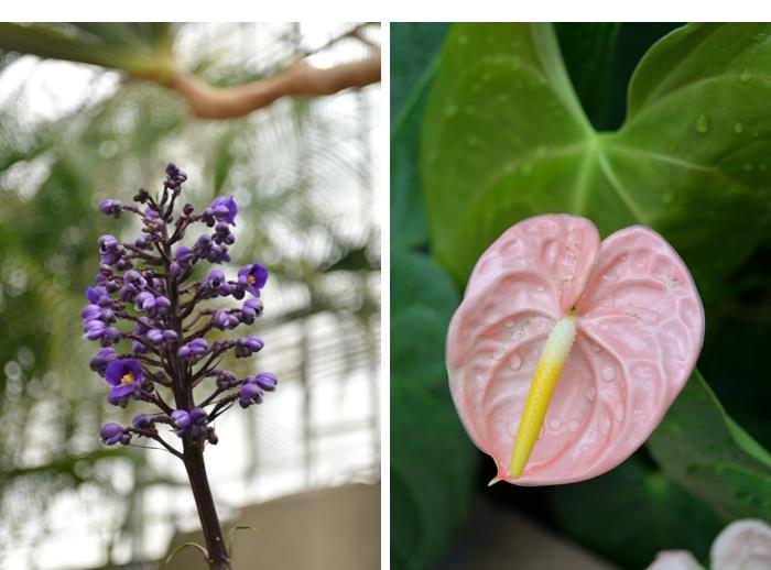 fleurs jardin botanique montreal