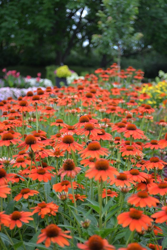 montreal jardin botanique fleurs