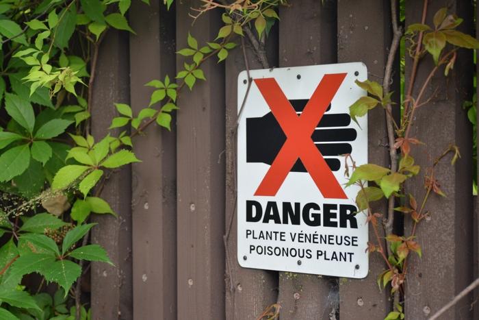 montreal plantes toxiques botanique