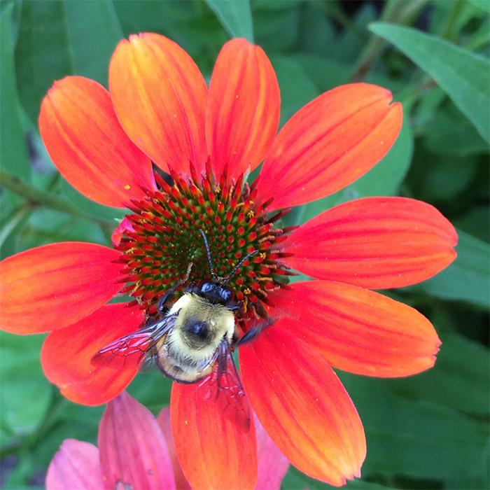 insecte fleur jardin botanique montreal
