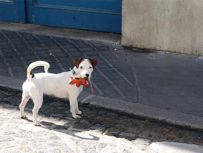 chien jouet paris