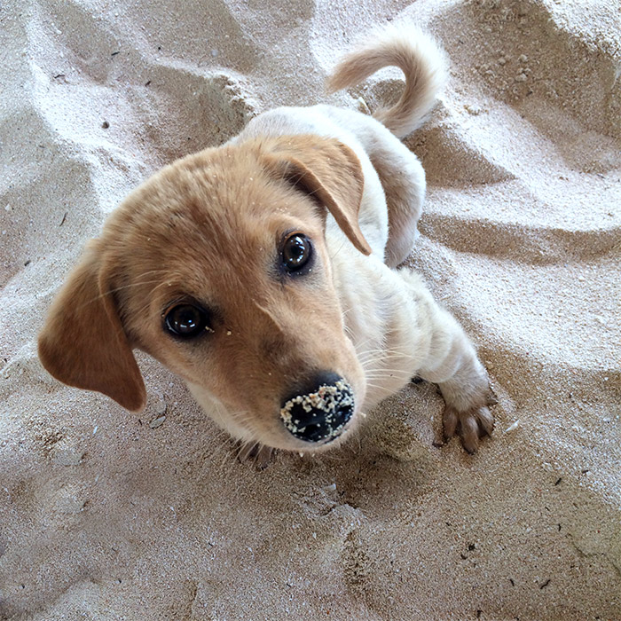 dako island philippines dog