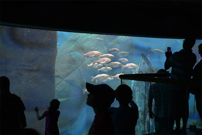 aquarium biodome montreal quebec