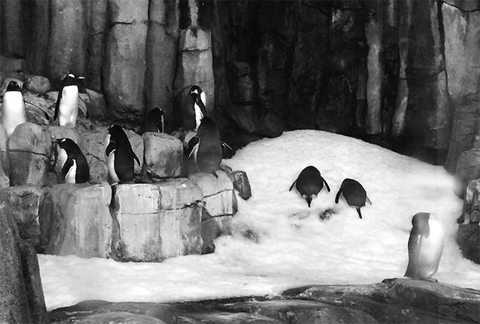 pingouins biodome