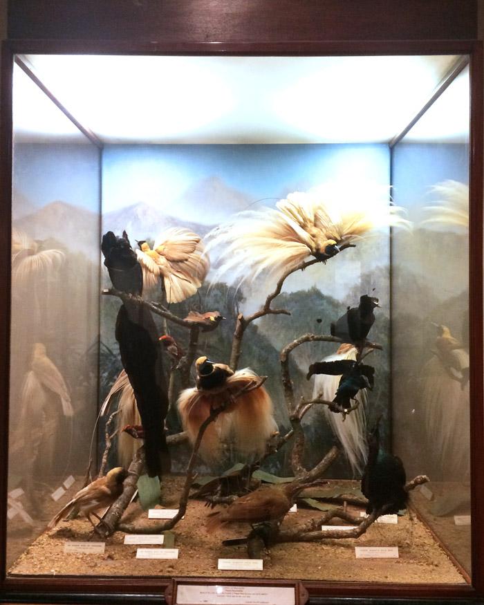 bristol art gallery museum
