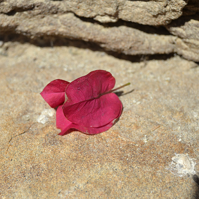 espagne catalogne fleur