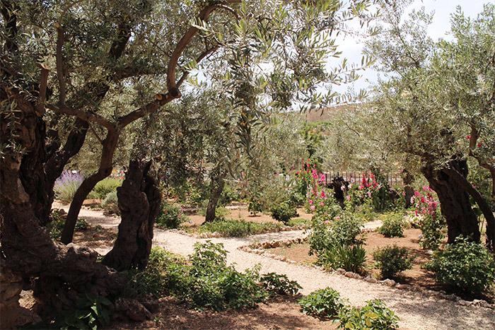 jardin oliviers jerusalem