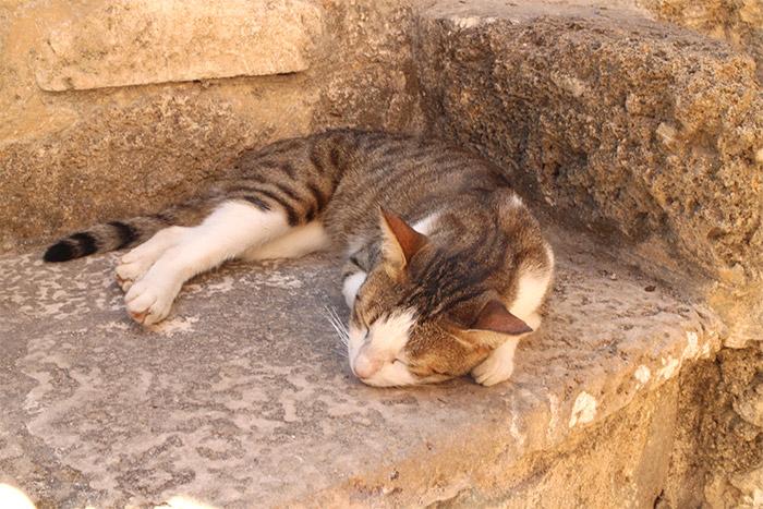 israel cat tel aviv