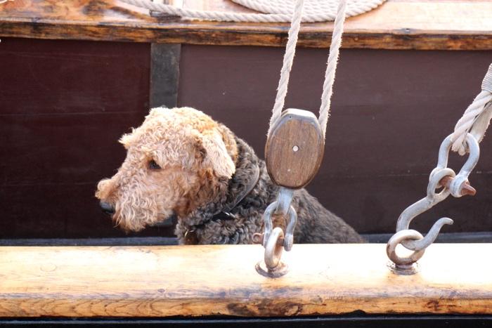 chien sur bateau
