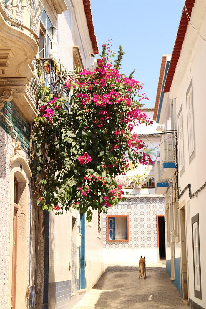 azulejos maison algarve