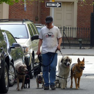 dogwalker_00