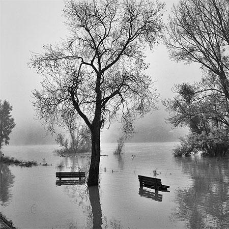 arbres dans l'eau