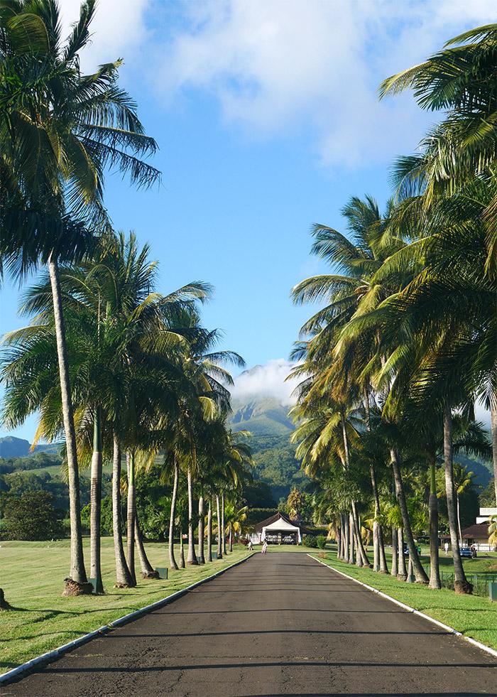 allee palmiers rhum depaz
