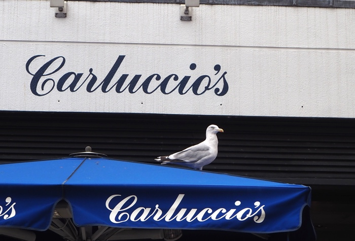 Carluccios Exeter