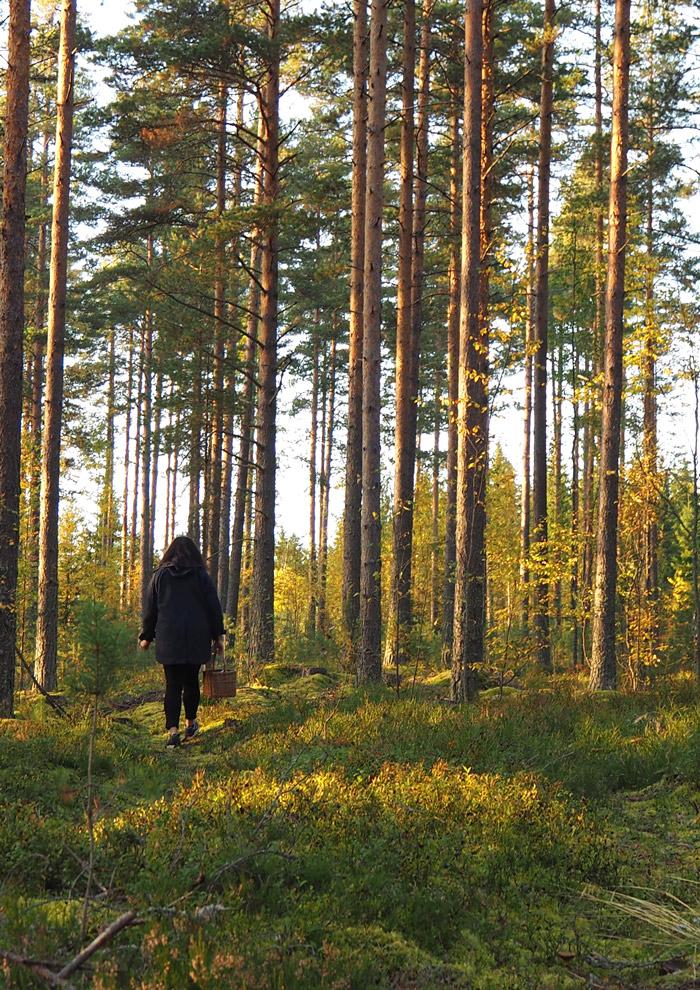 forêt cueillette champignons mikkeli