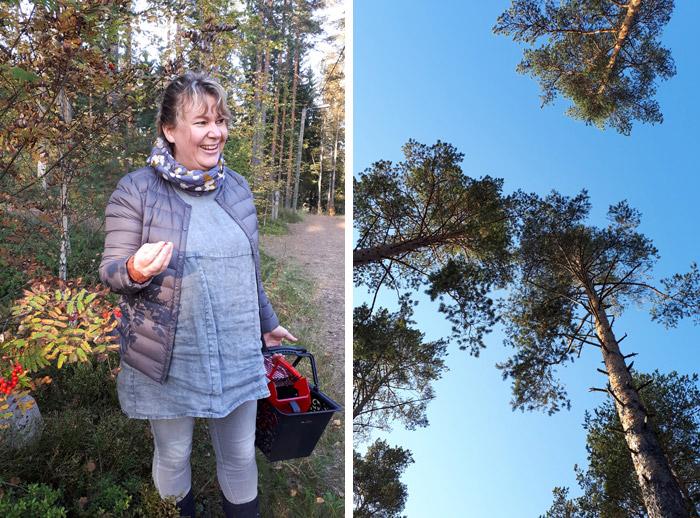 Finlande cueillette forêt