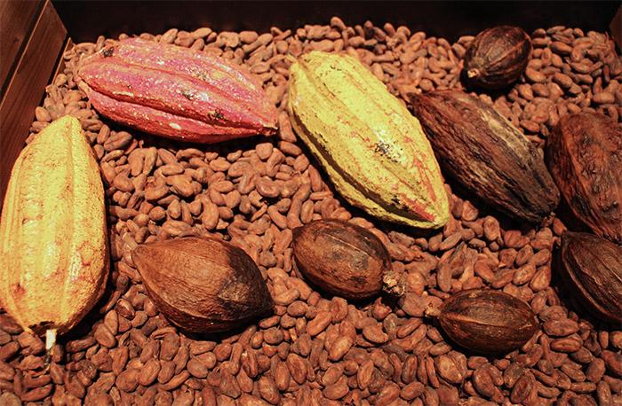 Lyon musee du chocolat